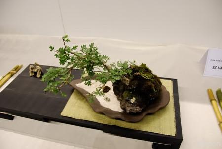 bonsaiexpo