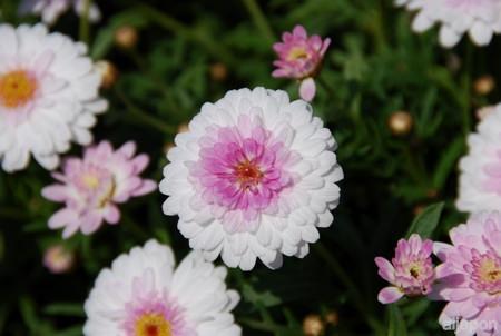florecilla8